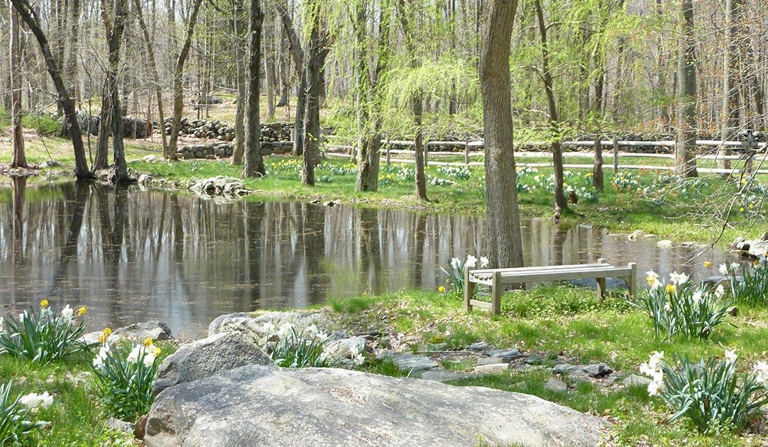 Pond-enhancements-5