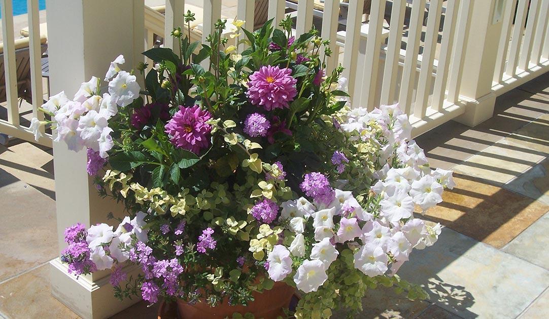 Seasonal-long-term-arrangement-18